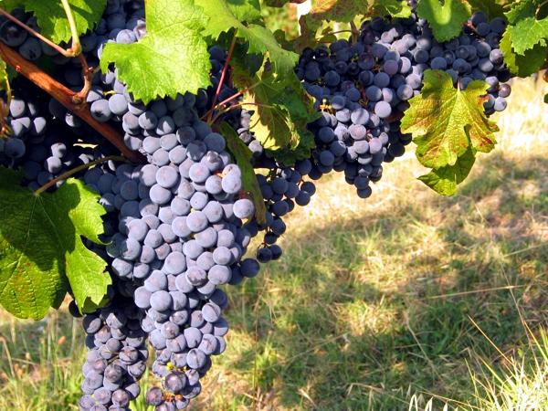 Produzione vino Parma